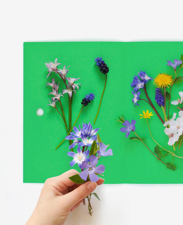 Des fleurs fraîches posées sur le livre Herbier de Fanette Mellier